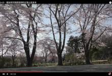 2016.4.9・福島県双葉郡富岡町紅葉山宝泉寺