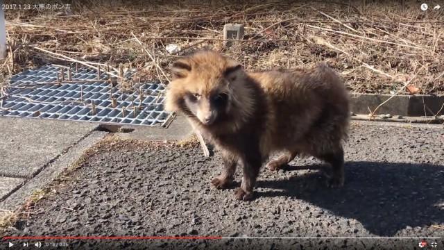 2017.1.23/大熊のポン吉