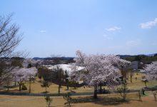 2017年春/広野町の桜