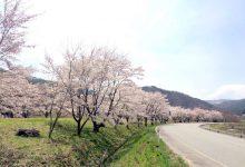 西山にしやま かね子かねこ さん   川内村