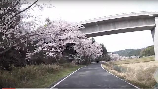 2016.4.9・楢葉町・金剛川 木戸川の桜