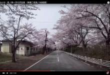 2016.4.10・夜ノ森一市の沢/桜並木