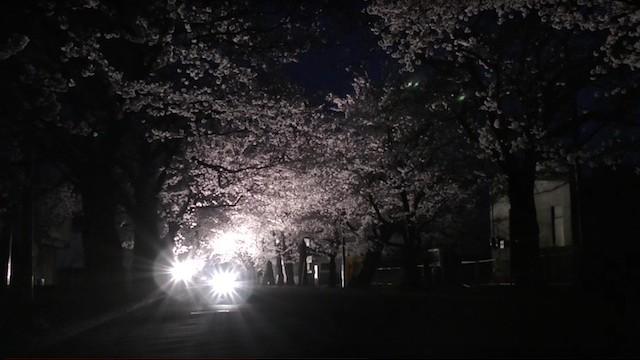 2016.4.6・富岡町夜ノ森・桜並木ライトアップ (HD推奨)
