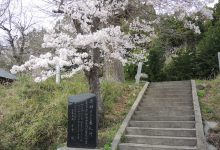 2017年春/双葉町の桜