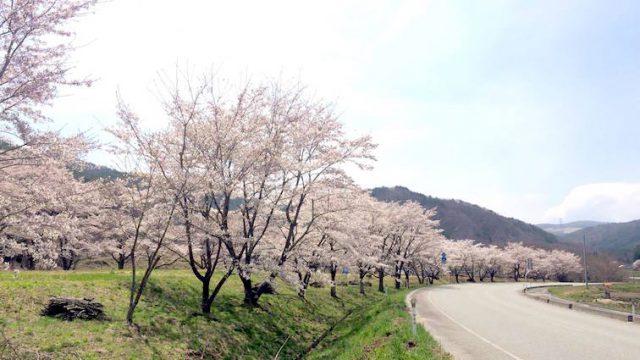 西山にしやま かね子かねこ さん | 川内村
