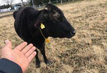 双葉郡未来会議 season7「特集!牛たちの行方」