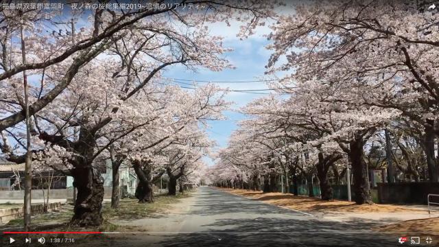 夜ノ森の桜総集編2019~追憶のリアリティ~