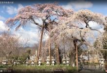 20190403 富岡町/宝泉寺枝垂れ桜